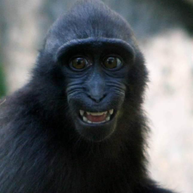 Hur stor Г¤r en gorillor Dick