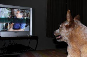 Hund och TV