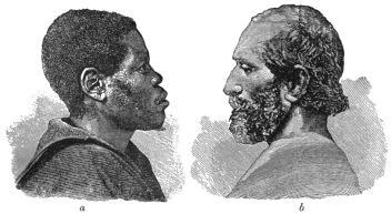 Etnicitet